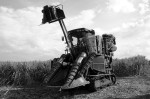 800px-Sugarcane_harvesting_equipment